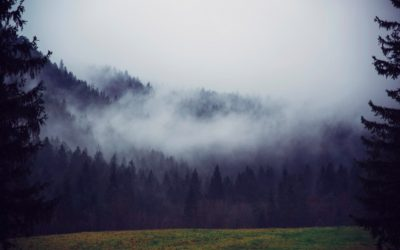 Perspective: Moving Out of the Fog